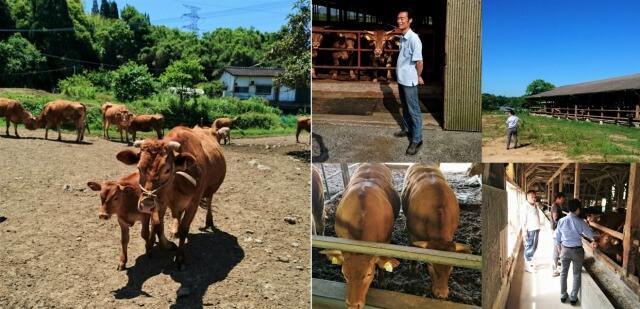 あか牛生産者訪問1